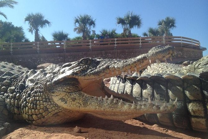 Agadir crocodile Park including transfer and tickets