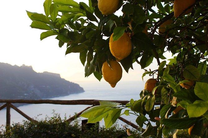 Amalfi Coast Lemon Tour all inclusive
