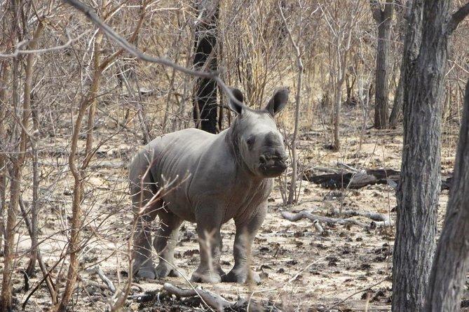 The Big 3 of Matopos Day Safari