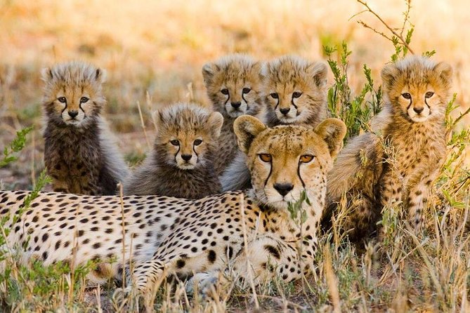 3 nights exclusive wildebeest migration masai mara safari