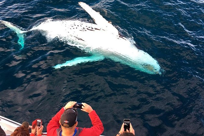 Whale Watching Cruise in Puerto Vallarta All Inclusive