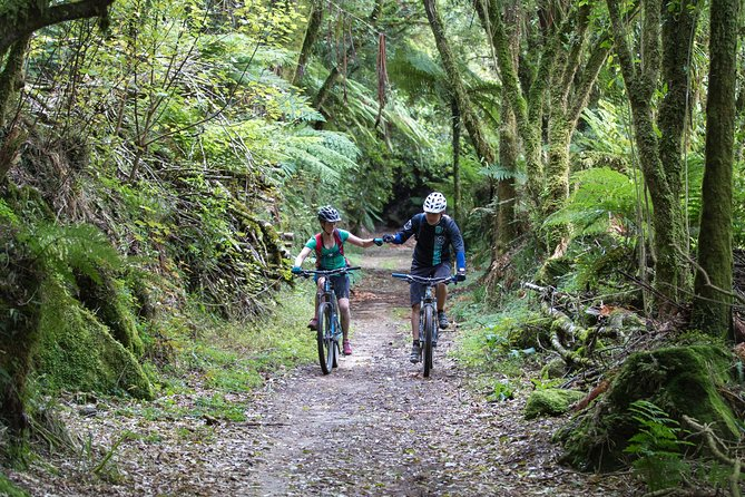 Timber Trail - Ongarue to Pureora Shuttle 2 Day Ride