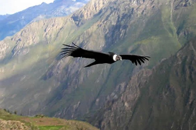 Chonta 1 day: the viewpoint of the condors in Cusco - private service