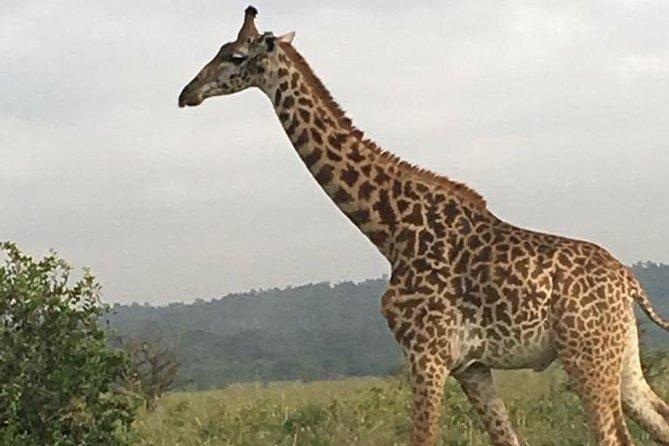 3 Days Nairobi - Naivasha - Amboseli - Nairobi.