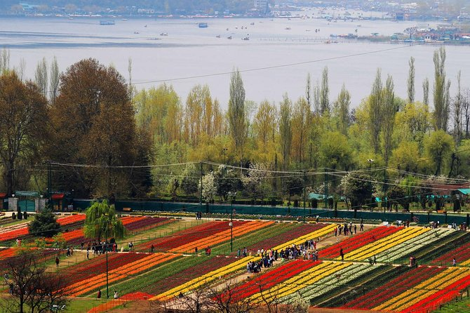 Tulip Garden Kashmir Package 4 Nights 5 Days
