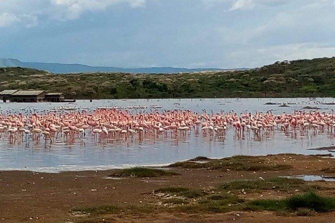 4 Days Great Migration Maasai Mara and Lake Nakuru Safari in Kenya