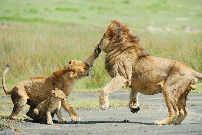 3 Days Masai Mara Magical Safaris