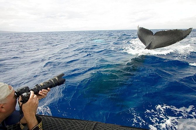 Samaná Whale Watching + Cayo Levantado (Bacardi Island) From Samana Port.