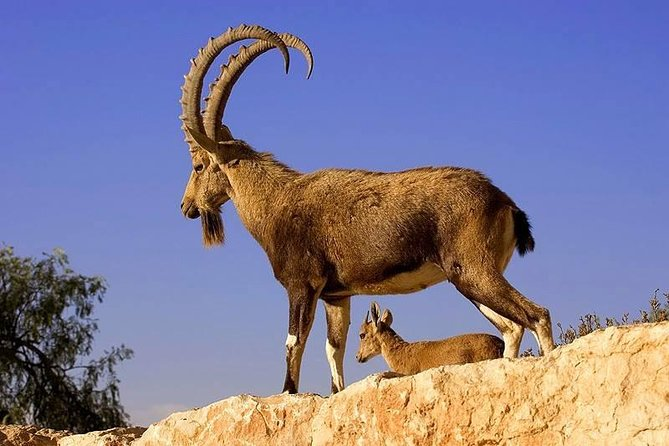 Khor Virap, Areni Winery, Noravank + Wild Goat Watching - private tour