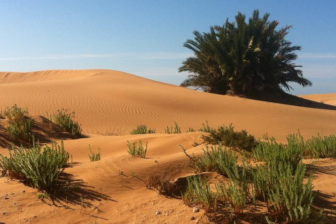 Desert Experience: 6-day jeep tour Southern Morocco
