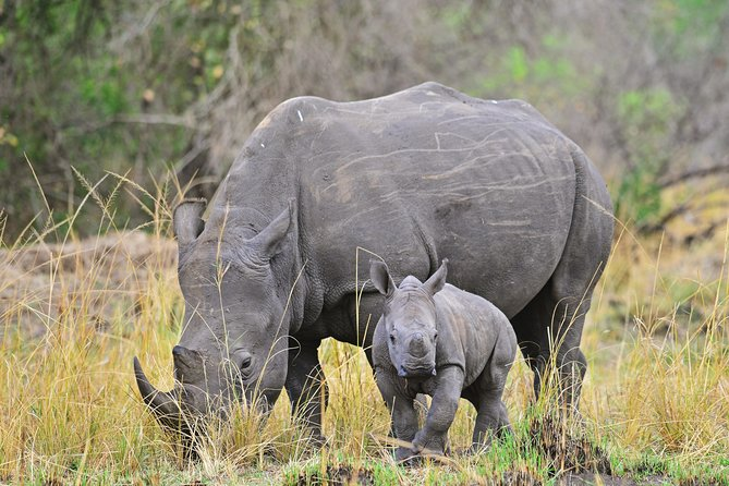 1 Day Ziwa Rhino Sancuary Tour photo 1