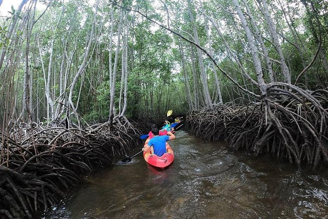 1 Hour Kayaking or Stand Up Paddle Adventure from From Lembongan to The Mangrove