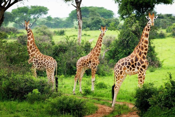 6 Days Lake Mburo & Gorilla Experience