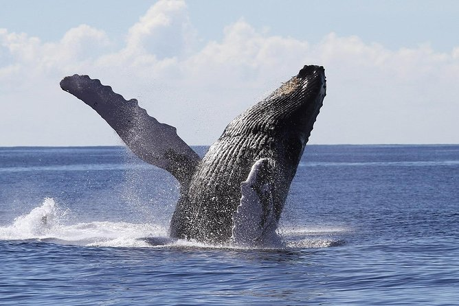 Samana Whale Watching Tour From Las Terrenas. Half Day Trip with Lunch