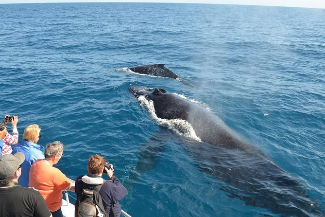 Samana Whale Watching and Bacardi Island and El Limon Waterfalls from Punta Cana