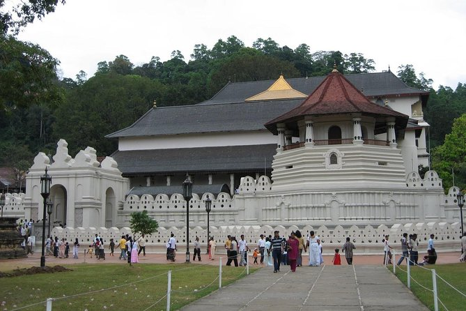 Kandy Day Trip with Tea Factory From Hikkaduwa & Surroundings - All Inclusive