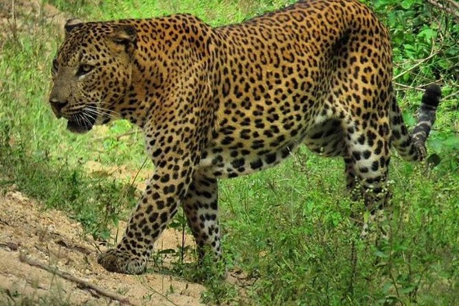 Yala National Park Safari with Naturalist-Guide
