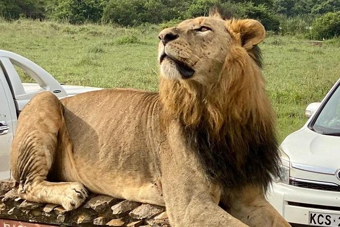 Classic Tour Nairobi national park/ Elephant orphanage/Giraffe Centre