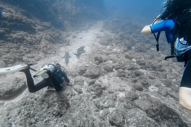 Refresher Scuba Diving Course Costa Rica