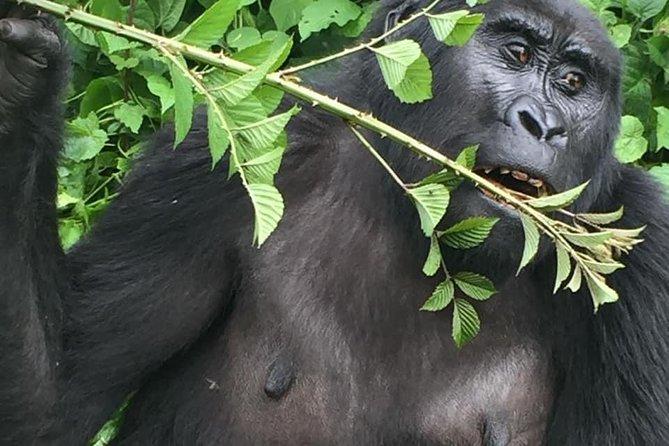 11 Days Rwanda Budgeted Safari - Gorillas & Wildlife Tours