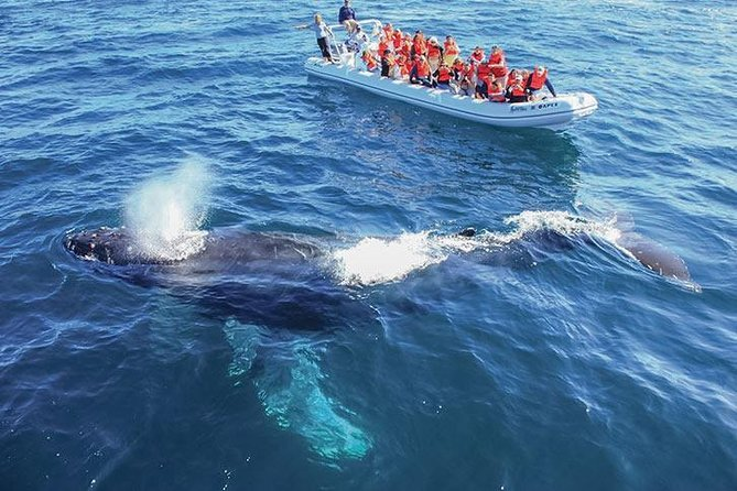 Whale Watching on Cabos San Lucas Cruise and Ground Transportation