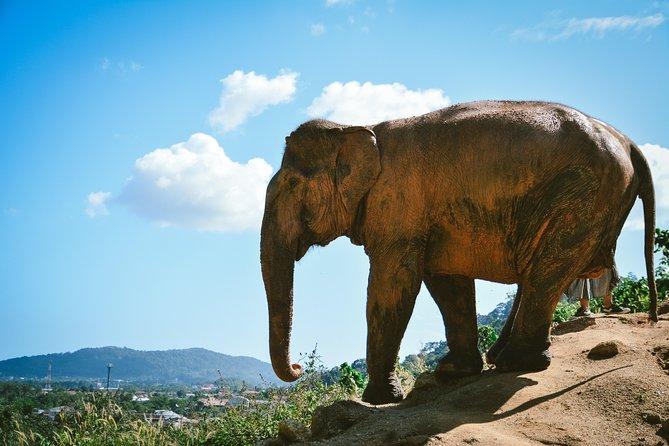 Elephant Jungle Sanctuary: Half Day Afternoon Program