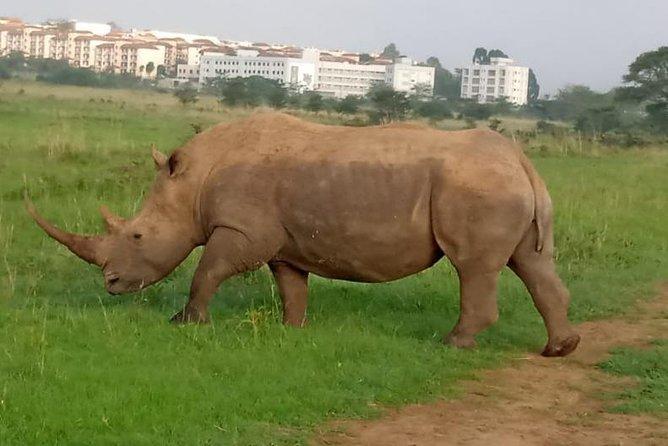 Nairobi National park city Sunrise game drive