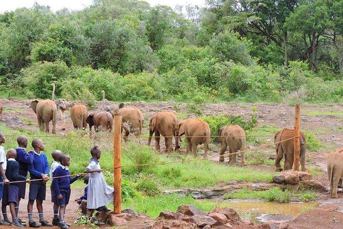 Nairobi National park & Elephant Orphanage