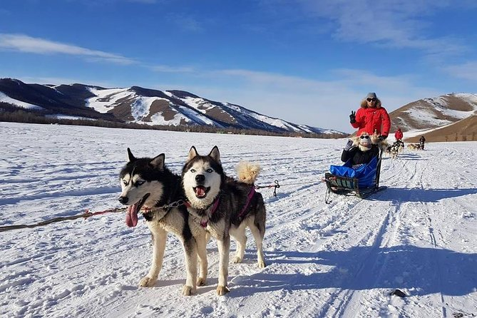 Dog Sledding in the Terelj National Park and Chinggis Khan Statue for 1 day.