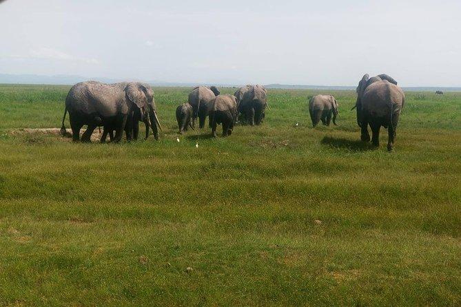 11 Days Guided Group Safari in Kenya And Tanzania