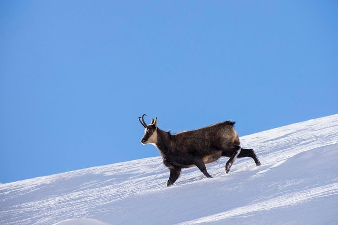 Megève: Observe Wildlife - Snowshoeing Trek photo 1