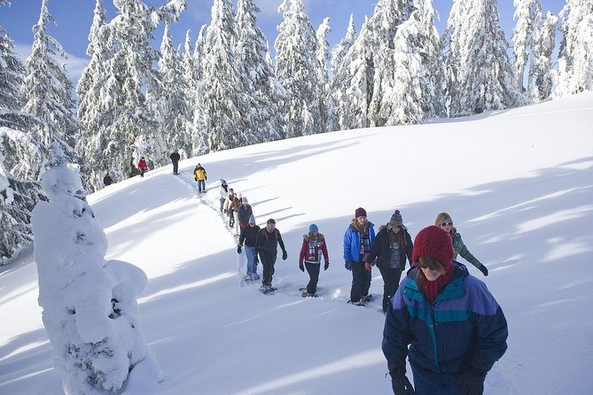 Sila National Park: half-day with snowshoes, guide and lunch