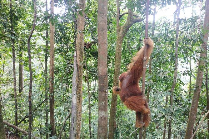 4 Days Bukit Lawang Tour Include 2 Days 1 Night Jungle Trekking