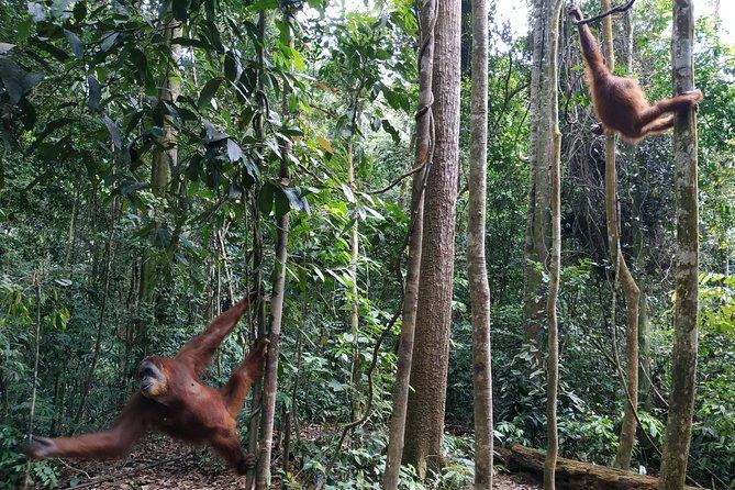 2 Days 1 Night Jungle Trekking in Bukit Lawang