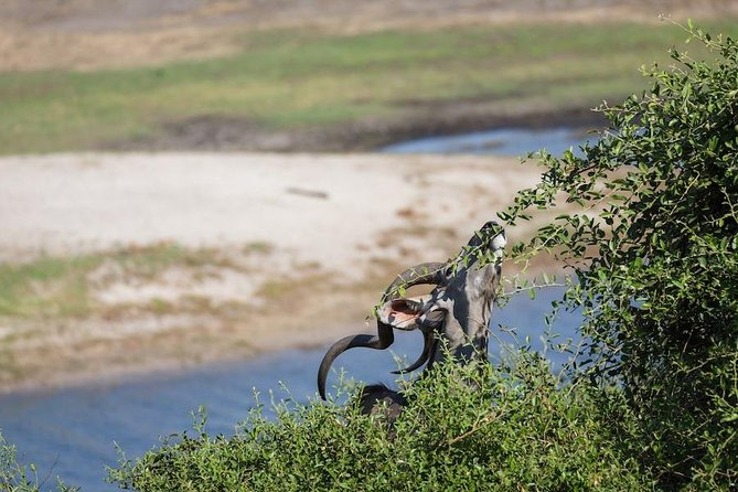 Chobe Safari Experience Day Trip from Livingstone photo 3