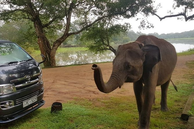 Yala Safari with Holiday Dreamy - Feel your freedom with Nature Sri Lanka