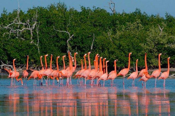 Las Coloradas & Rio Lagartos Tour, Live The Nature!