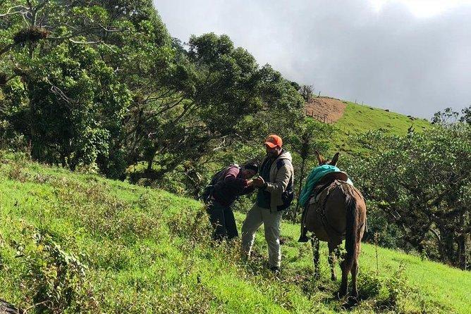 Kennedy Hill in the Sierra Nevada de Santa Marta