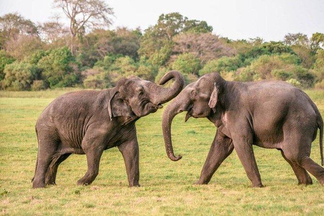 Kaudulla National Park Evening Safari