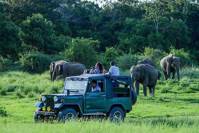 Udawalawe Safari Day Trip - Group Tour