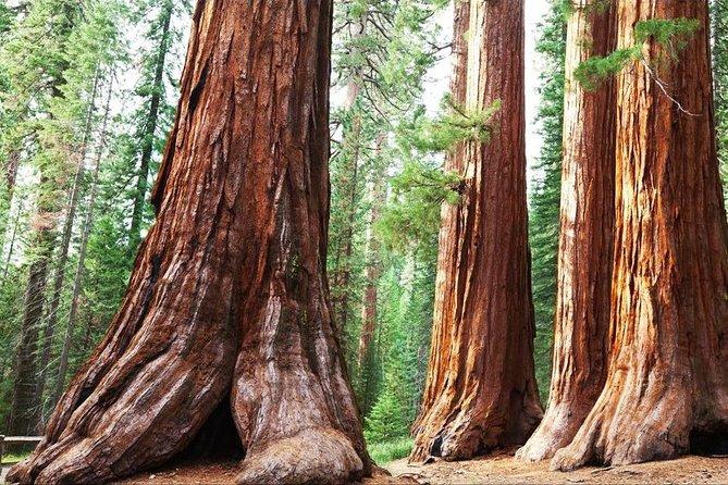 Sequoia Park Private Tour