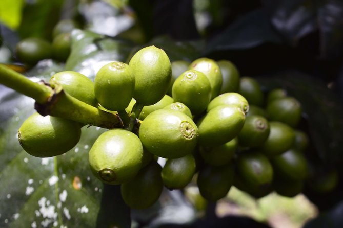 Authentic Coffee Farm Experience from Bogota • Private Tour • 7h