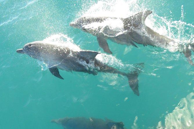 Roebuck Bay Snubfin Dolphin Cruise