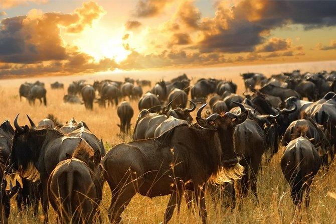 3 Days Maasai Mara Budget Safari (Daily Departure + 24h Customer Service)