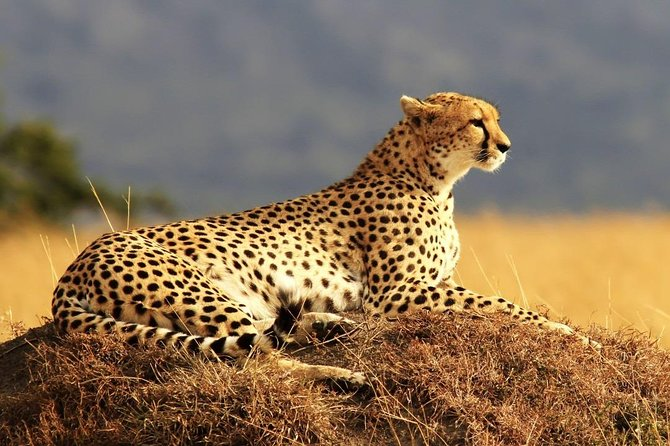 6 Days Maasai Mara-Amboseli Budget Safari (Daily Departure+24h Customer Service)