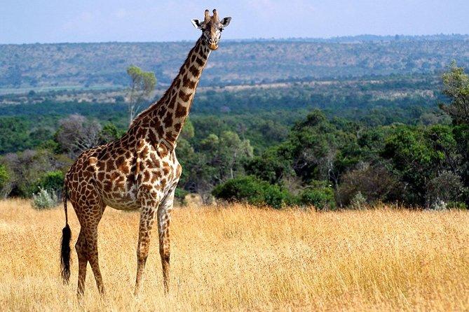 4 Days Maasai Mara Budget Safari (Daily Departure + 24h Customer Service)