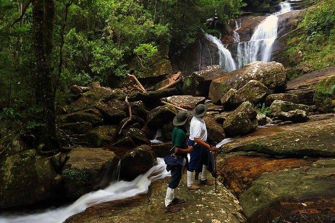 Sinharaja Rain Forest Tour