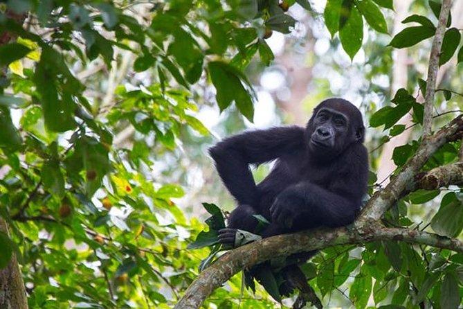 Gorilla tour – 4 days