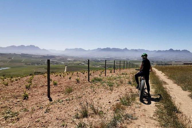 Cape Town: E-bike Wineland tour half-day