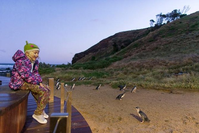 Private - Phillip Island Tour With Penguin Parade, Wildlife & Lunch photo 2